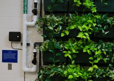 school cabinets green wall